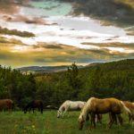Feng Shui Tendenzen in Juni - Pferde Monat