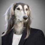 Hundejahr 2018 Feng Shui Tendenzen