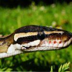 Schlangenmonat Mai