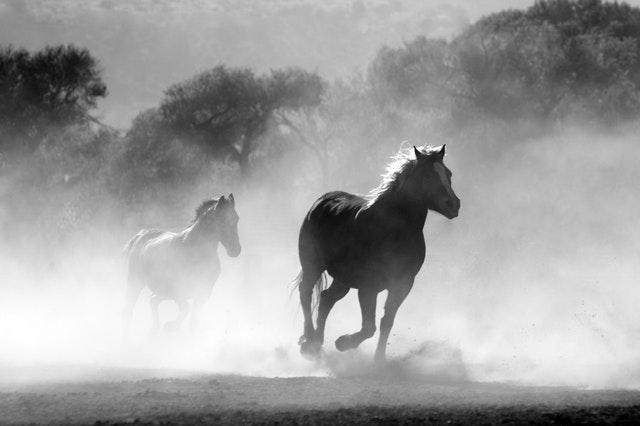 Pferdemonat Juni
