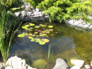 Wasser im Feng Shui Garten