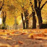 Feng Shui und Herbst