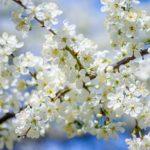 Feng Shui im Frühling